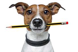 The dog blog
